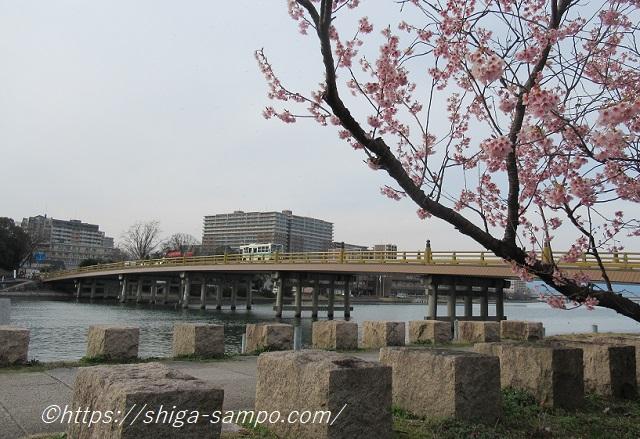 瀬田の唐橋と桜